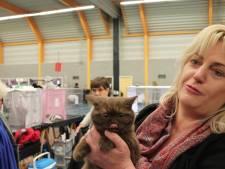 Britse kortharen en gelukkige baasjes bij schoonheidswedstrijd voor katten