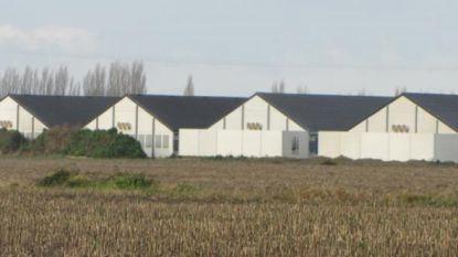 """Al 900 bezwaren tegen komst tweede kippenbedrijf in Beerst: """"Vooral de geur baart ons zorgen"""""""