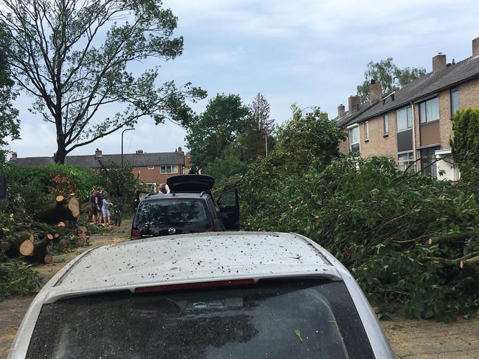 Omgevallen bomen zorgden voor een ravage op De Del in Rheden.