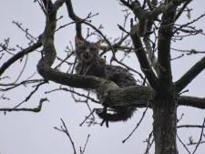Koukleumende kletsnatte kitten valt uit boom bij Steenwijk, vlak voordat de brandweer het dier kan pakken