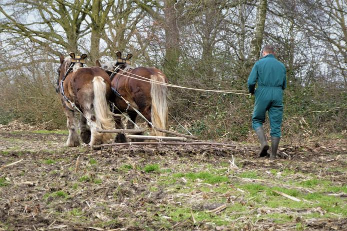 Boer paul egt het maïsveld bij d' Ekkers om de bodem los te maken.