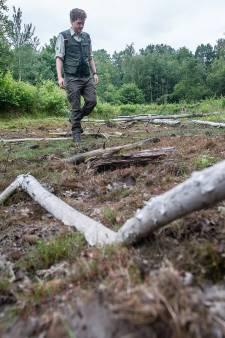 De droogte hakt erin bij de bossen bij Dorst: 'De natuur kan zich niet herstellen'