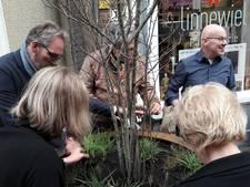 Stadshart Arnhem krijgt voor 100.000 euro aan bomen en planten