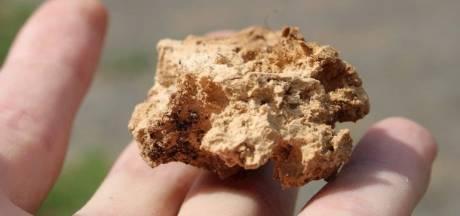 Zevenaar waarschuwt hondenliefhebbers voor gebakken spons
