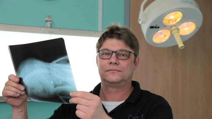 Wirtjo Meursing met de röntgenfoto waarop een kogeltje in het kattenlijf te zien is.