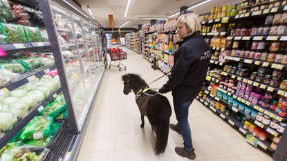 Gaan shoppen met blindengeleidepaardje