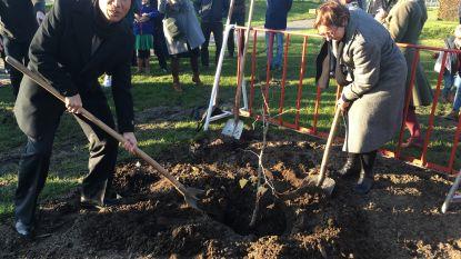 Mini-vredesboom die kernramp overleefde op Sint-Baafssite geplant