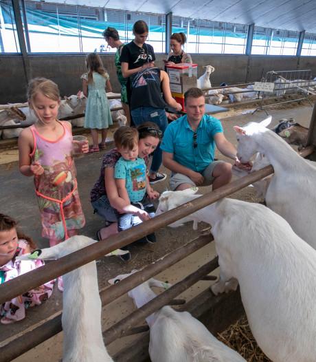 Geitenkijkdag in Veldhoven trekt veel bezoekers