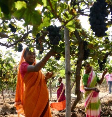 Het is eens wat anders dan olifanten: we gingen op wijntrip naar India