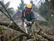 Bomen kappen in het buitengebied? In Berkelland heb je straks (bijna) altijd een vergunning nodig