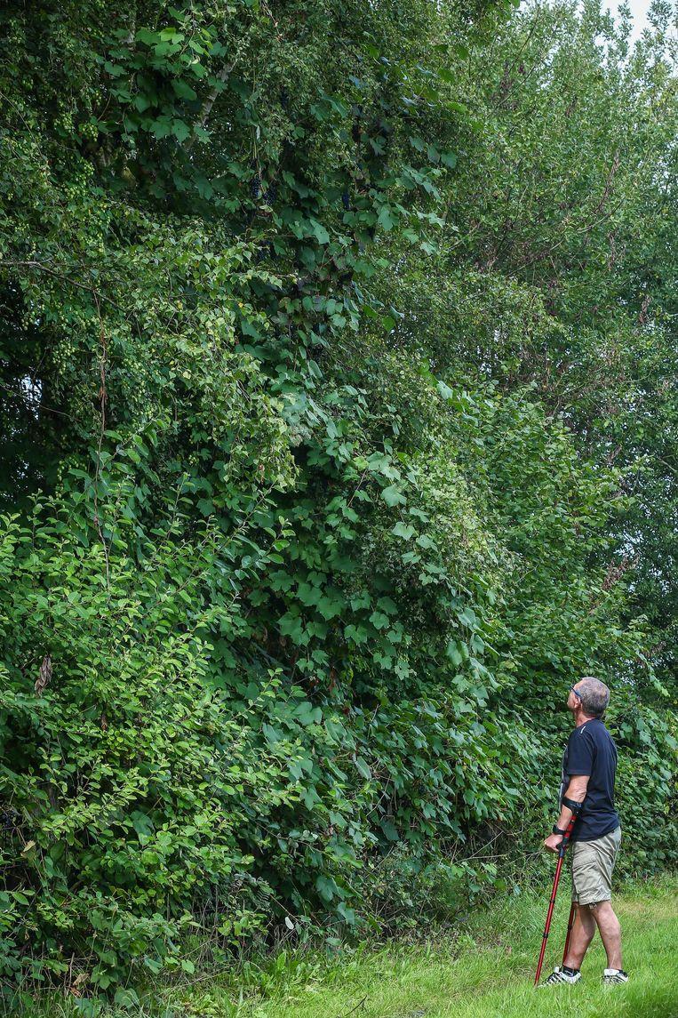 Swa Tielens bij de druivenrank in zijn tuin.