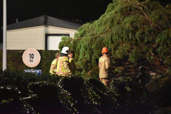 De brandweer zaagt de boom in stukken