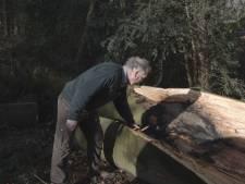 Beuken uit 1882 niet meer bestand tegen storm: bomenkap in Hof Espelo nodig