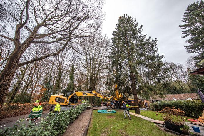 De familie Van Oostenbrugge schenkt dit jaar de kerstboom voor de Grote Markt in Zwoille
