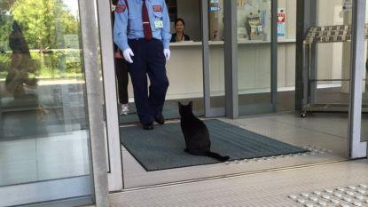 Schattig: katten willen per se Japans museum betreden maar bewaker laat dat niet toe