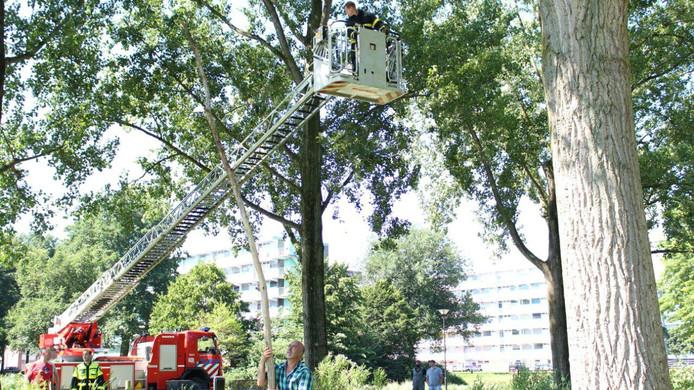 Met groot materieel wordt geprobeerd het katje na een verblijf van zes dagen uit de boom te redden.