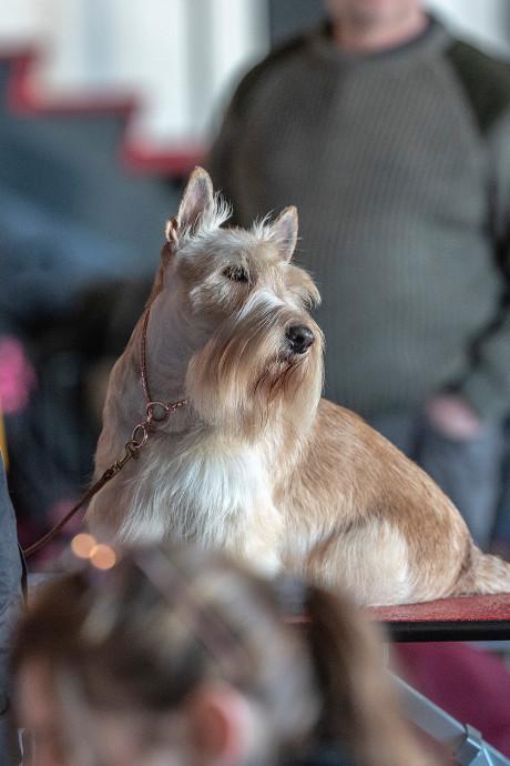 Hard werken én mooi zijn voor 104 honden in Winterswijk