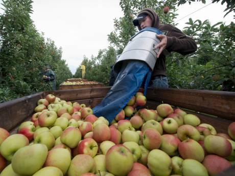 Helft Poolse fruitplukkers moet buiten Zeeland wonen