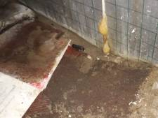Consternatie in Brabants dorp: 'slang' van 30 centimeter blijkt naaktslak te zijn
