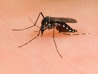 """WHO: """"Zikavirus zal zich verder verspreiden over bijna heel Amerika"""""""