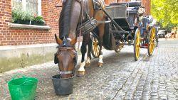 Woensdag en donderdag geen paardenkoetsen in Brugse binnenstad door hitte