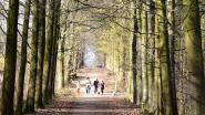 Praatcafé dementie stelt nieuwe wandeling voor
