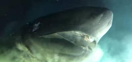 L'attaque impressionnante d'un requin préhistorique filmé à 500 mètres de profondeur au large de la Floride