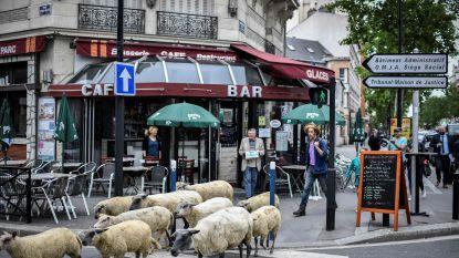Duizend schapen hebben rol overgenomen van maaimachines in Frankrijk (en dat worden er nog veel meer)