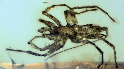 Miljoenen jaren oude spin had een staart