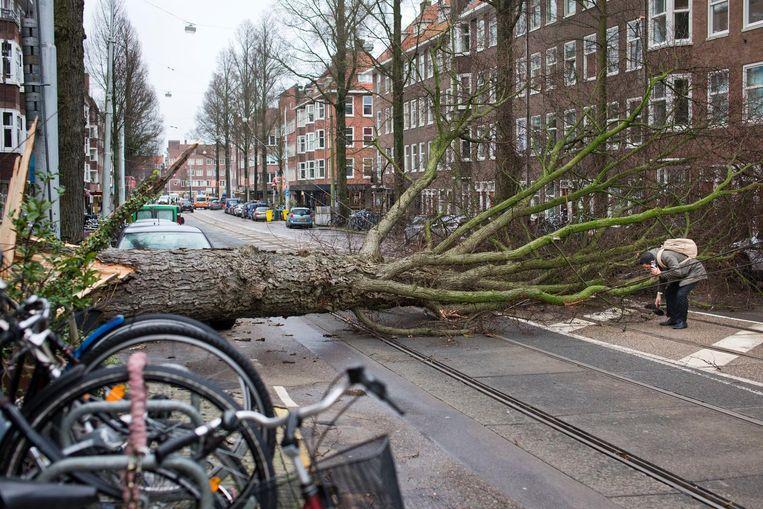 Een man in Amsterdam naast de boom die hem op een haar na heeft gemist. Beeld null