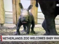 Tiende neushoornbaby 'Royal Burgers' Zoo' haalt nieuwsuitzending CNN