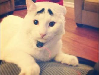 Kat met zwarte wenkbrauwen is hit op internet
