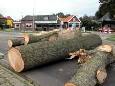 Bomen langs N315 bij Rietmolen leggen in rap tempo het loodje