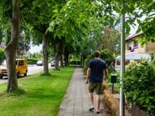 Vervanging talrijke laanbomen aan Oerdijk in Schalkhaar verdeelt bewoners