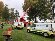 Brandweer Harderwijk spuit kat uit de boom die daar al vier dagen zat