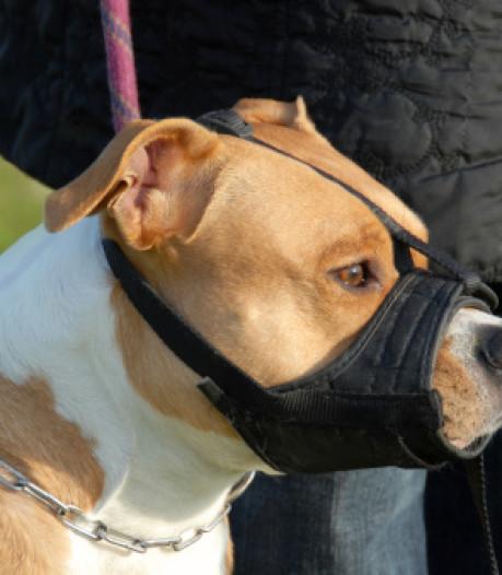 Vier agressieve honden in Tholen moeten voortaan worden gemuilkorfd