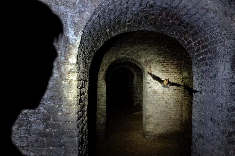 De batdetector tikt, een vleermuis is in aantocht in de ondergrondse gangen van Fort Willem in Maastricht.