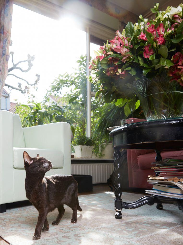 Bella (15), Oosters korthaar, Amstelveen. Beeld Isabella Rozendaal