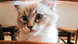Eerste hulp bij kattenkwaad: wij vroegen raad aan een kattentherapeut