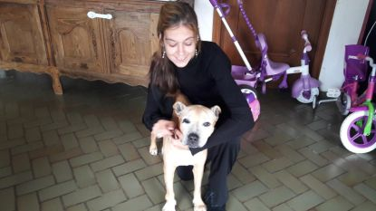 Hond vier dagen lang aan lot overgelaten nadat baasje onwel wordt en overlijdt