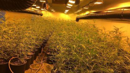 """Man riskeert 3 jaar cel voor cannabisplantage in industriepark: """"Moest enkel plantjes onderhouden en ken opdrachtgevers niet"""""""