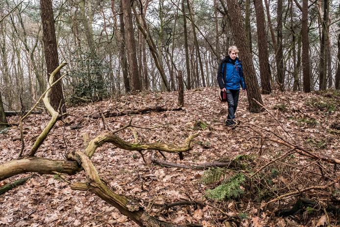 Paul van der Heijden op de grafheuvel uit de Romeinse tijd in de bossen van Overasselt. foto Theo Peeters
