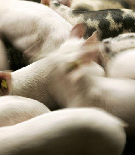 Graspeel in Zeeland krijgt er toch een varkensstal bij