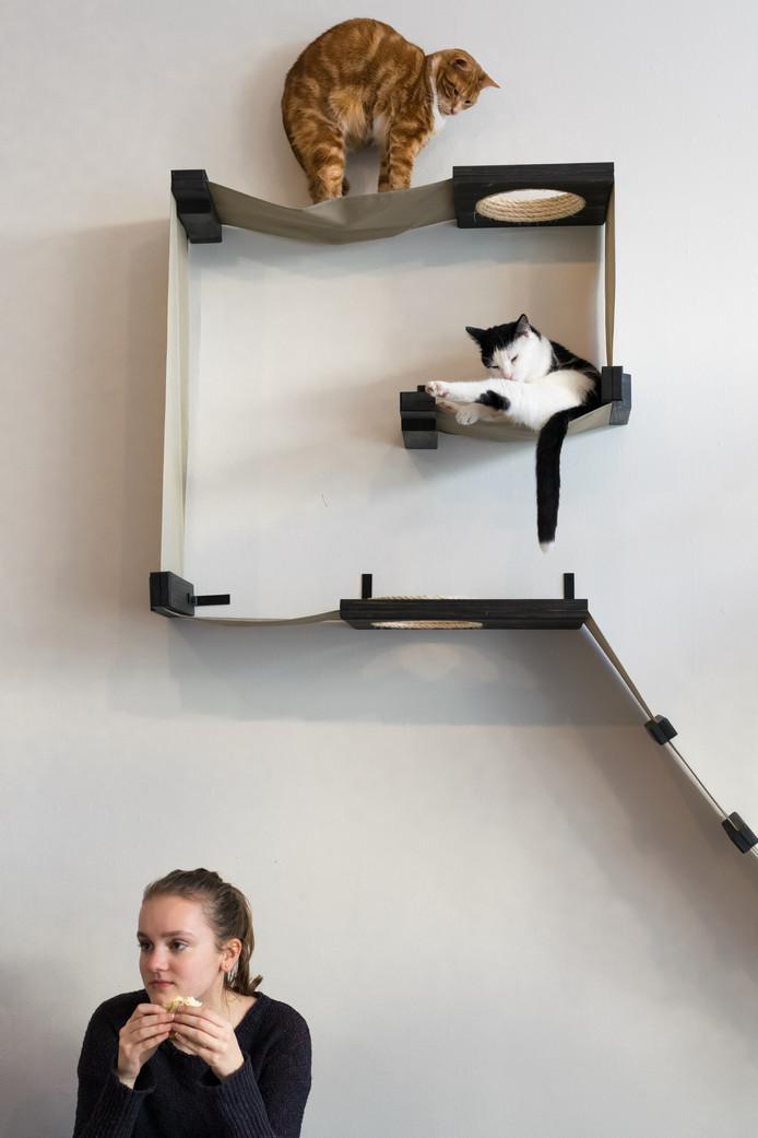 Ditjes & katjes - ,,Het kattencafé in de Piet Heinstraat. Ik ben dol op poezen en vind dit café zó'n leuk idee!''