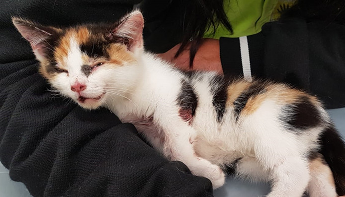 Dierenambulance Zuid-Holland Zuid, kitten