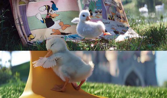 Een héél schattig filmpje van Disneyland: dit baby-eendje wil Donald Duck zijn.