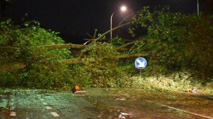 Opnieuw meldingen van stormschade in Koksijde: loshangende takken boosdoener
