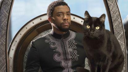 Opvallend: zwarte katten worden eindelijk weer geadopteerd dankzij 'Black Panther'-film