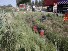 Paard schrikt na inhaalactie tractor en belandt in sloot in Dordrecht