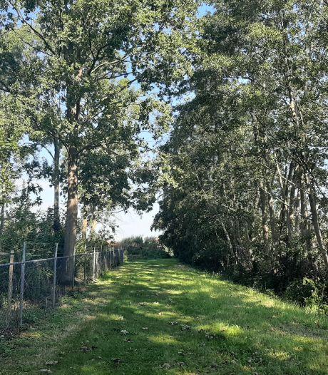 Bomenrij bij De Spetter blijft voorlopig staan